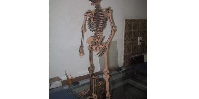 Skeleton wood