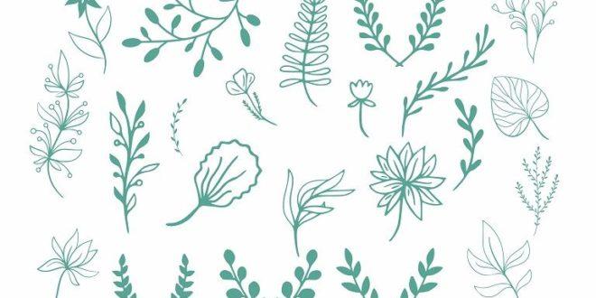 Free vector decor plants leaves