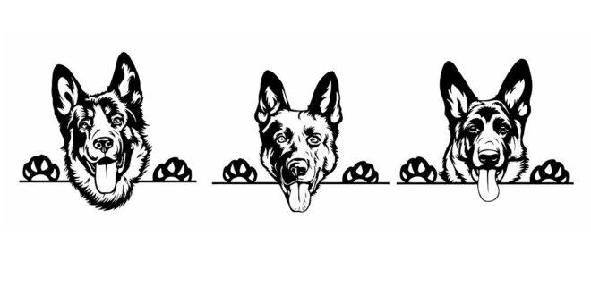 German Shepherd Dog Silhouette SVG DXF CDR Vectors