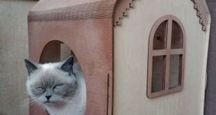 cat house to laser cut free design