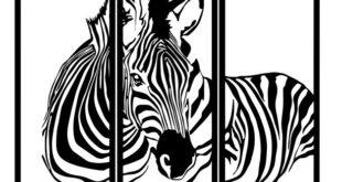 Zebra frame SVG DXF CDR
