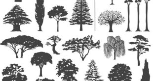 Tree silhuette vectors SVG Free